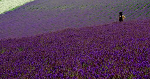 lavender-the-bathtub-diva-2
