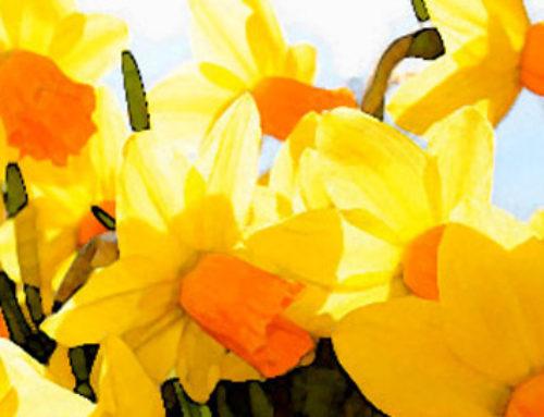 Sunshine Spring Bath Recipe!